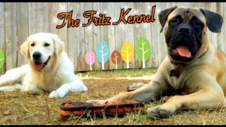 The Fritz kennel - Home